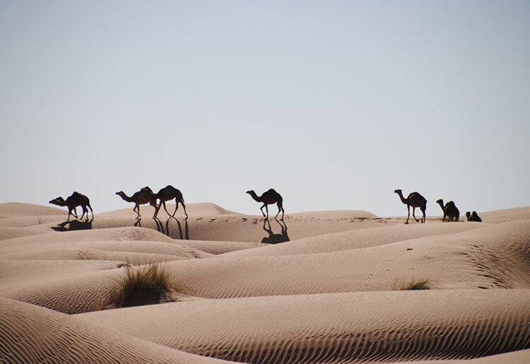 Viaggi Tunisia 4x4 moto