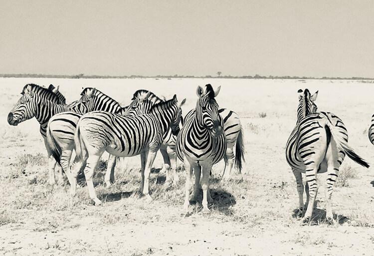 namibia viaggio 4x4 avventura